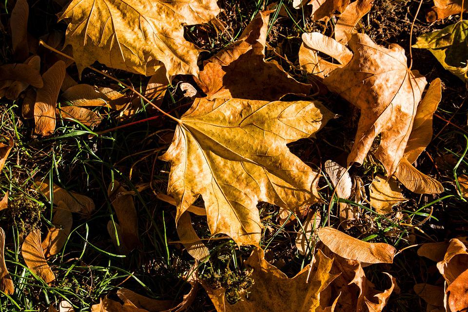 Leaves, Fall Foliage, Autumn, Fall Color, Brown