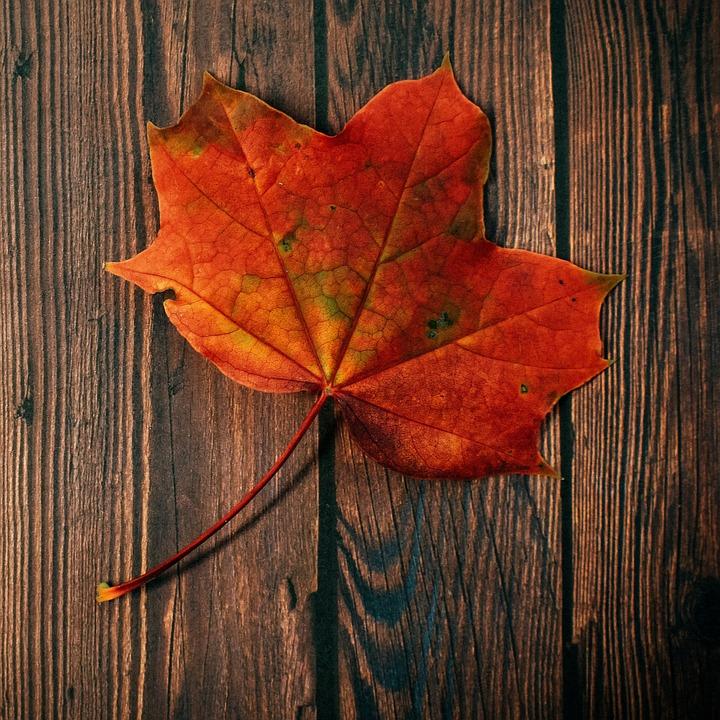 Autumn, Fall, Foliage, Leaves, Leaf, Nature, Plant