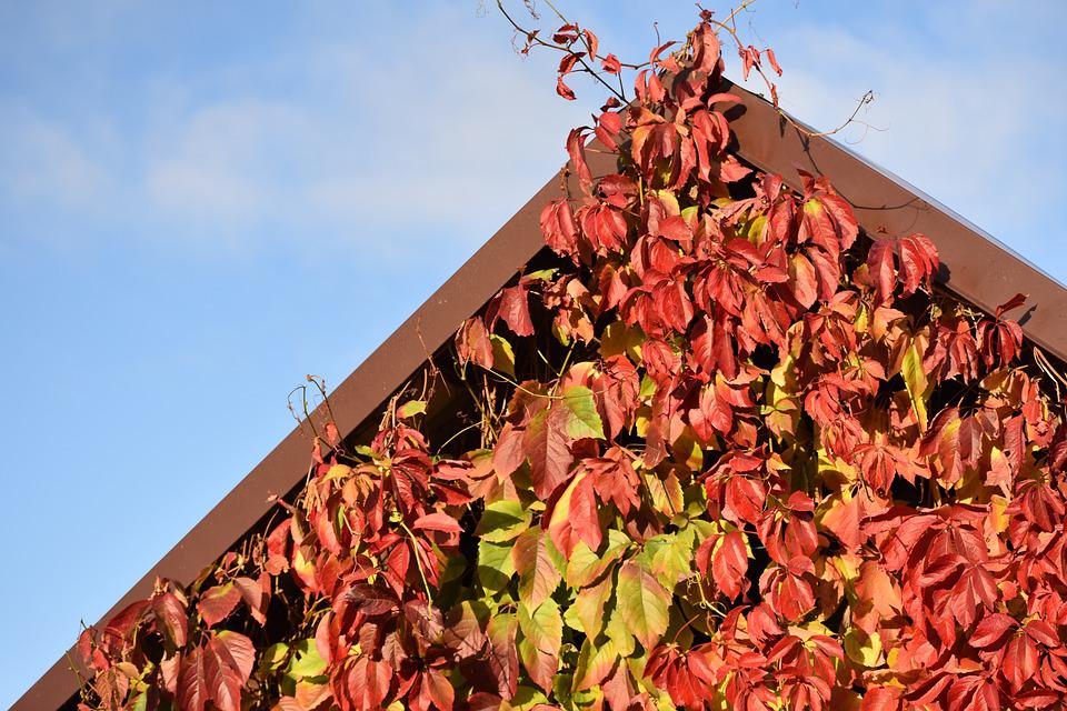 Autumn, Leaves, Red, Yellow, Whip, Gazebo, Sky, Blue