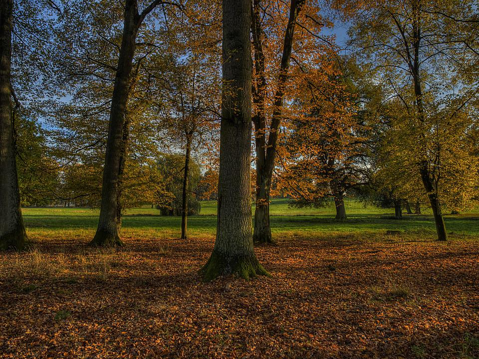 Autumn, Herbsstimmung, Forest, Leaves, Trees, Nature