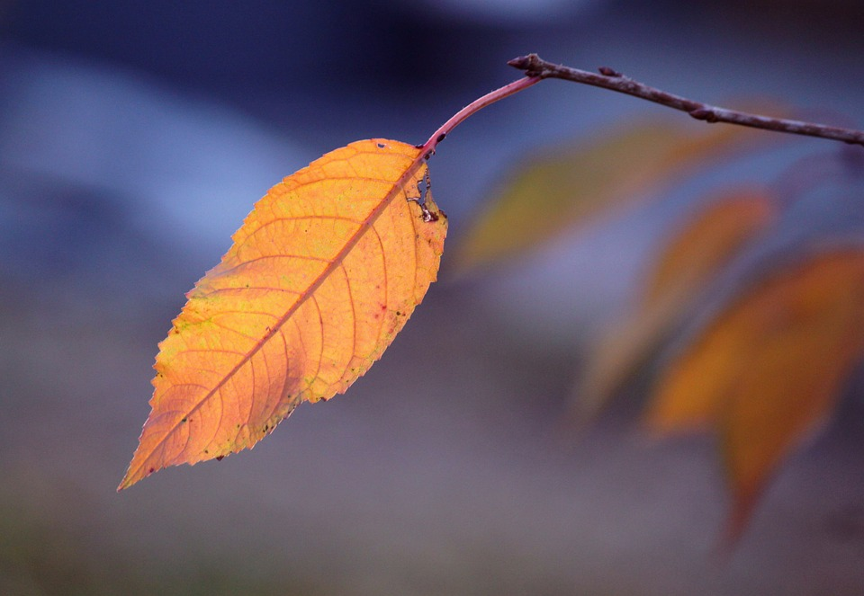 Leaves, Leaf, Autumn, Leaves In The Autumn