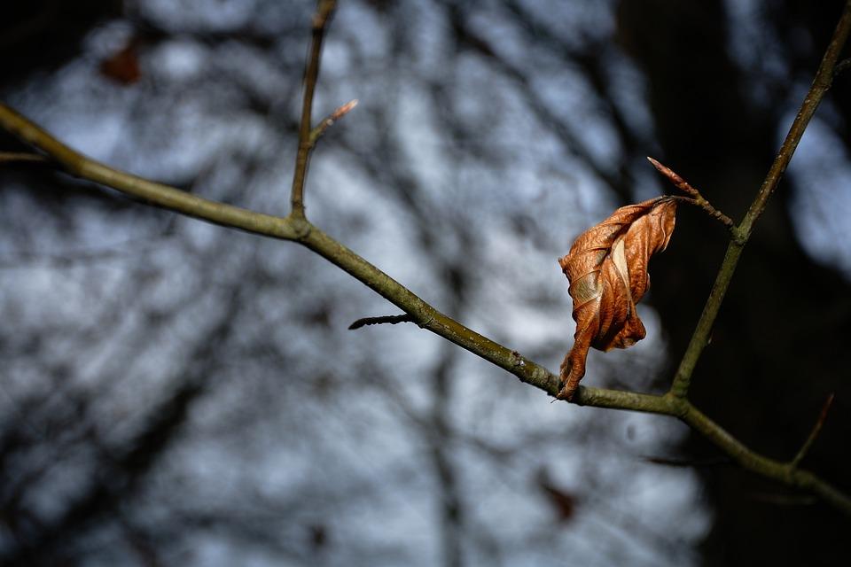 Autumn, Leaf, Leaves, Nature, Mood, Fall, Wood, Trees