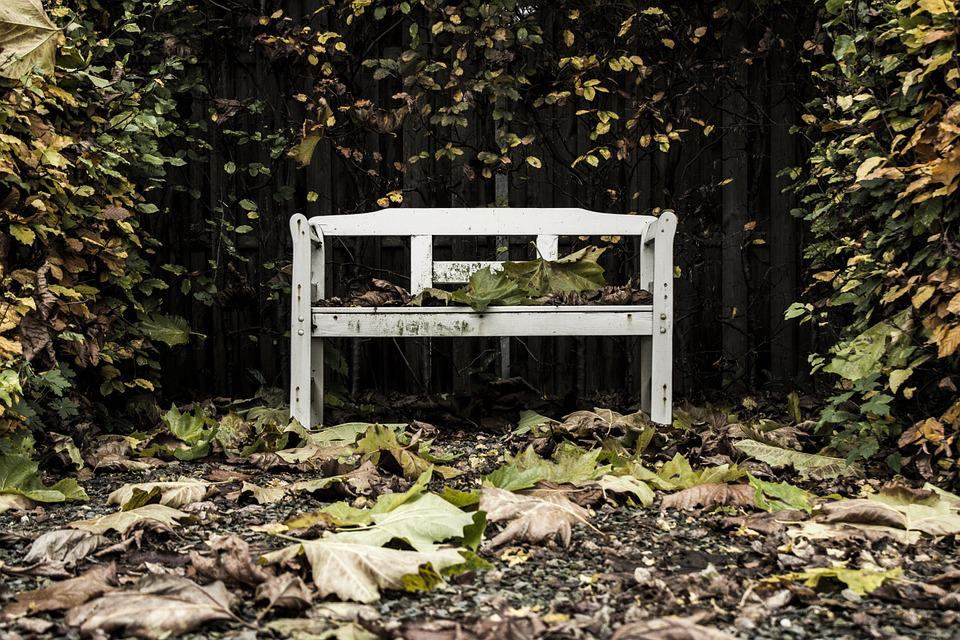 Bench, Trees, Leaves, Autumn, Backyard, Weathered