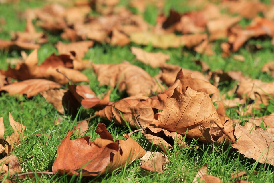 Autumn, Leaves, Withered, Leaves In The Autumn