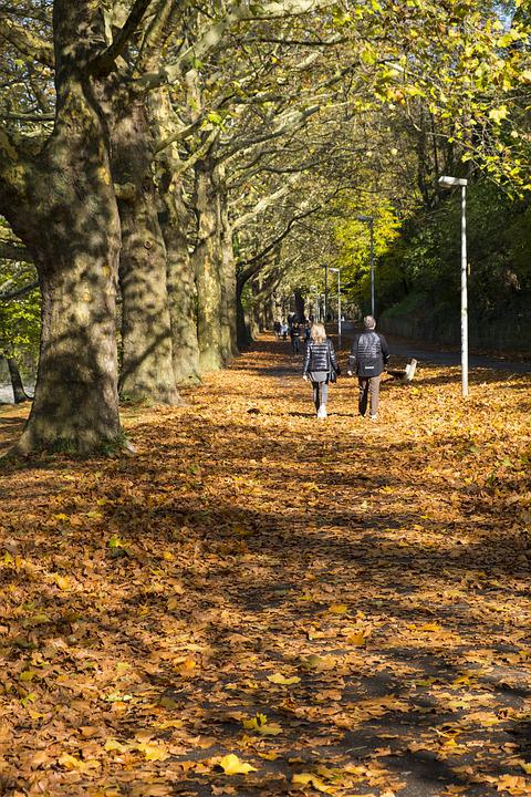 Away, Sidewalk, Avenue, Autumn, Leaves, Trees, Nature