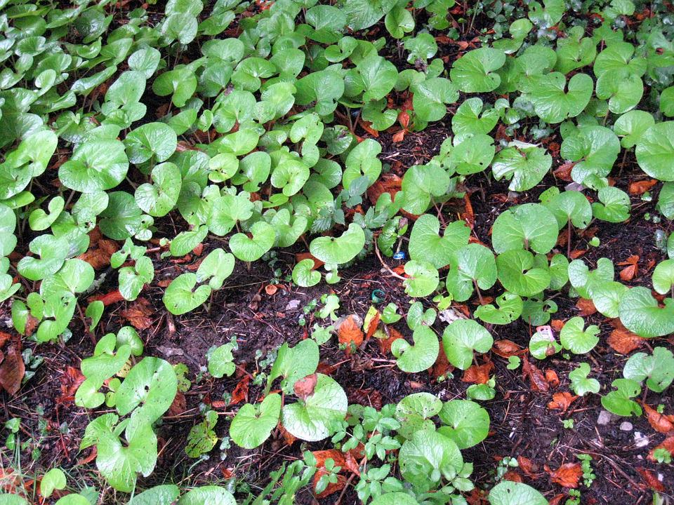 Leaves, Background, Soil, Leaf, Growth, Ground, Nature