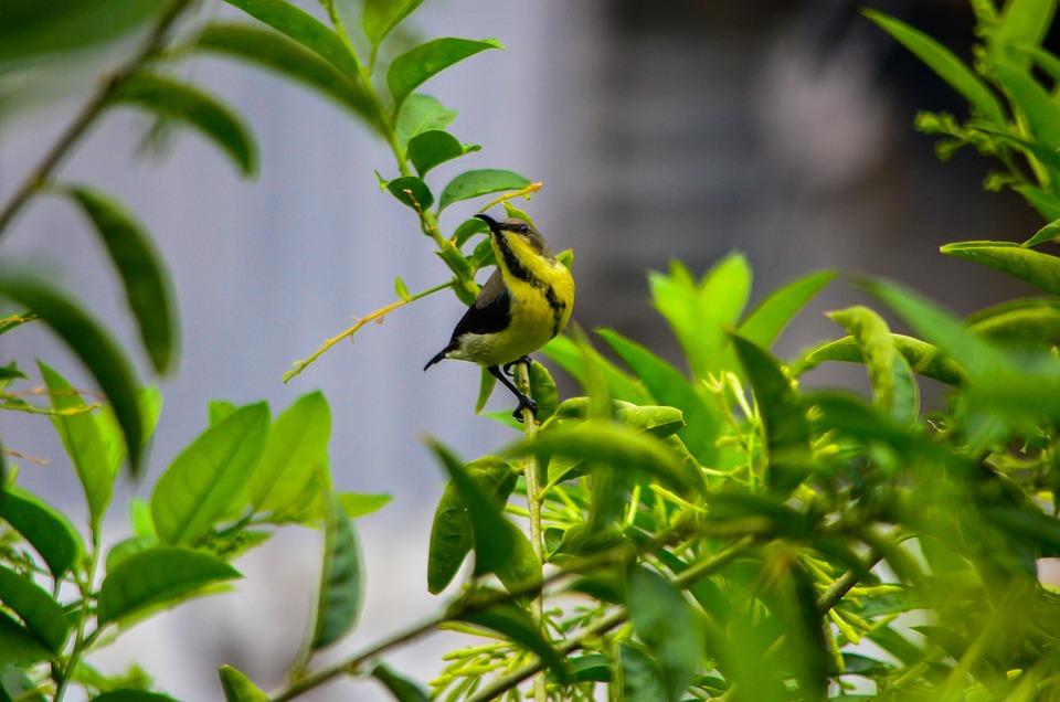 Bird, Beak, Wings, Tree, Leaves, Foliage, Perched