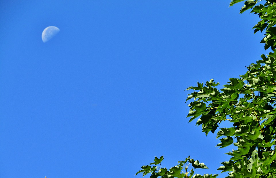 Tree, Leaves, Green, Sky, Blue, Moon, Day