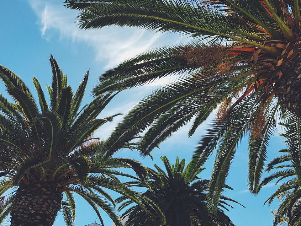 Blue, Bright, Happy, Leaves, Palm Tree, Palm Trees