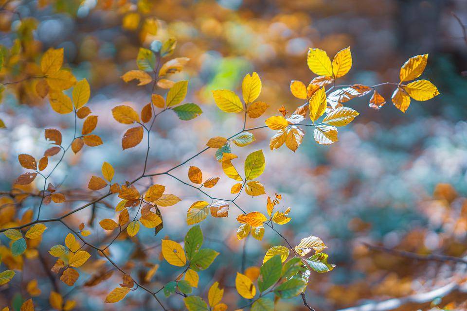 Autumn, Branches, Leaves, Foliage, Autumn Leaves