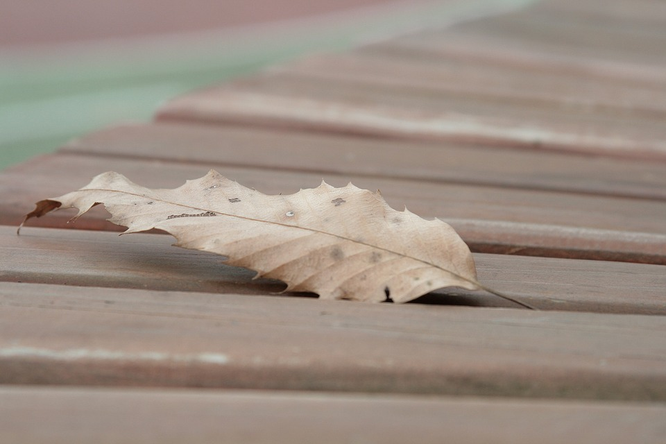 The Leaves, Autumn, Chair, Break, Leaves, Street