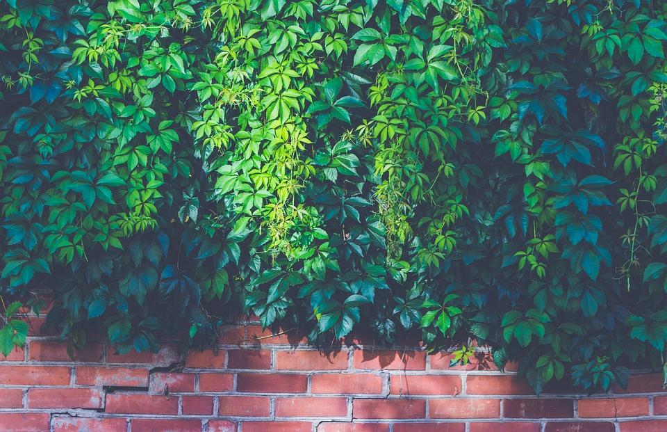 Brick Wall, Bricks, Bright, Leaves, Light, Outdoors