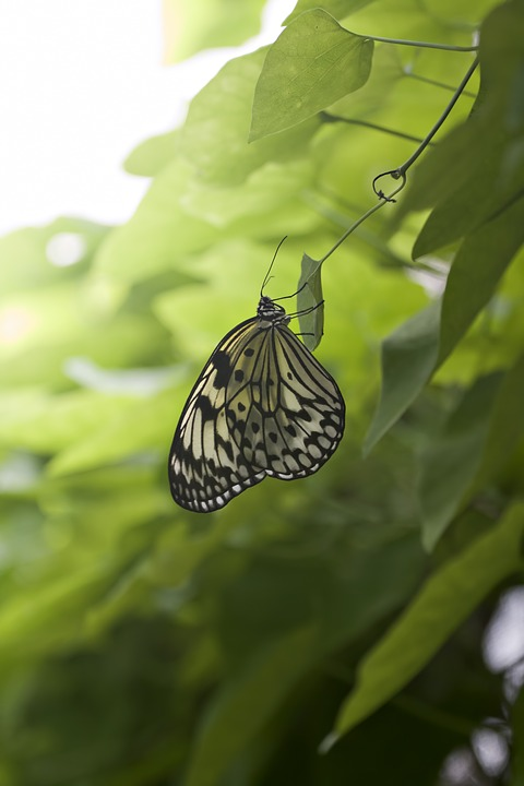 Butterfly, Green, Leaves, Nature, Life, Fragile