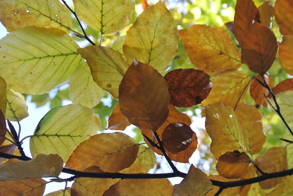 Autumn, Leaves, Color, Nature, Forest, Fall Foliage