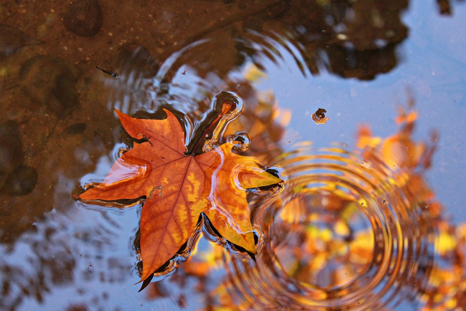 Leaves, Water, Reflection, Color, Colorful, Nature