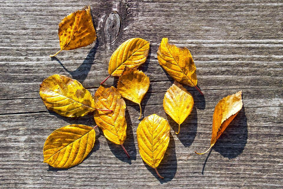 Autumn, Colorful, Leaves, Fund, Background, Fall Color