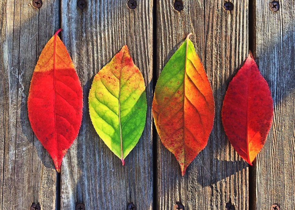 Leaves, Fall, Colors, Rainbow
