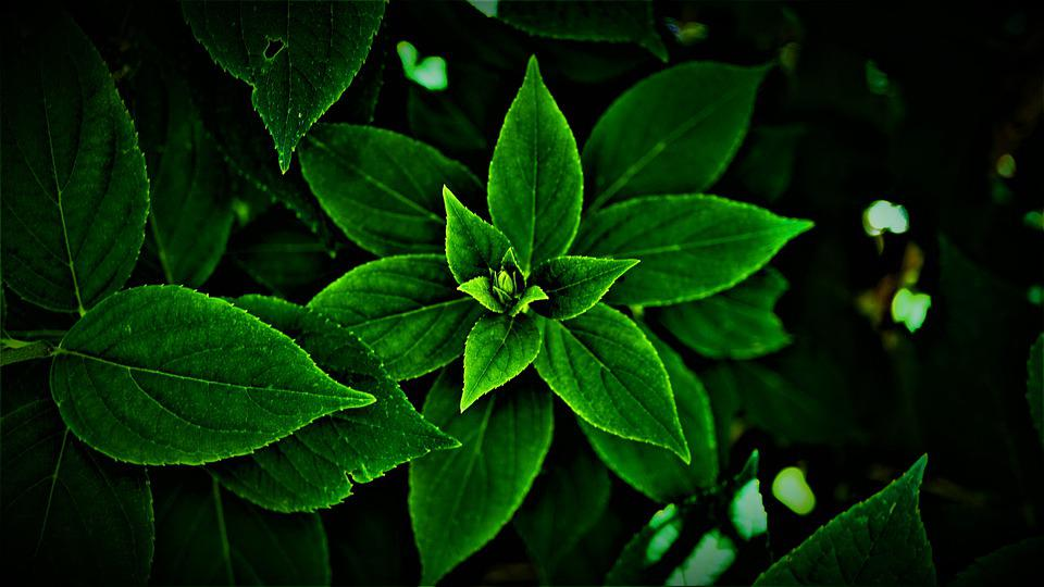 Leaves, Green, Bright, Dark, Darkness, Hope