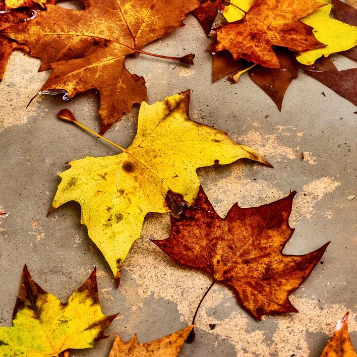 Leaves, Fallen, Dead, Autumn, Foliage, Yellow, Brown