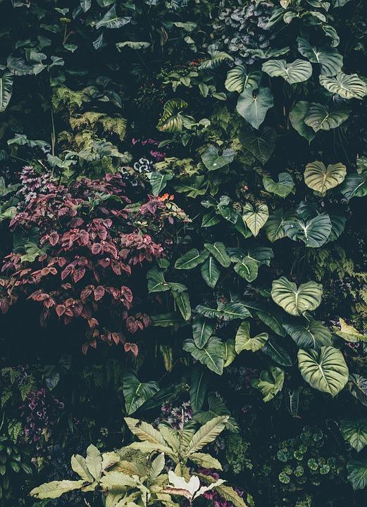Botanical, Shrub, Bush, Ivy, Leaves, Color, Decoration