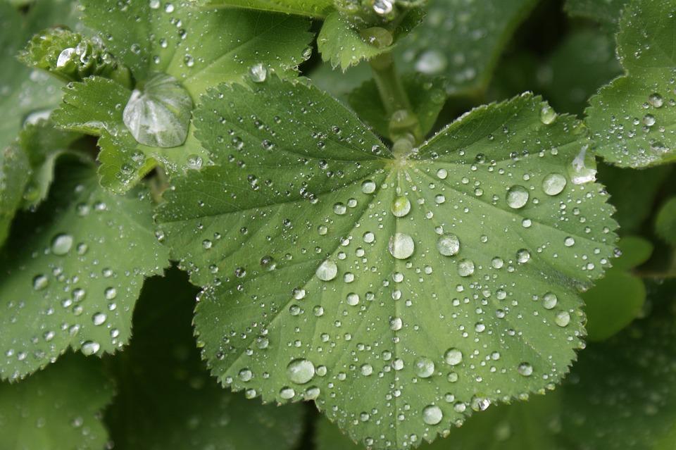 Green, Wet, Wassertrofpen, Nature, Leaves, Dew Drops