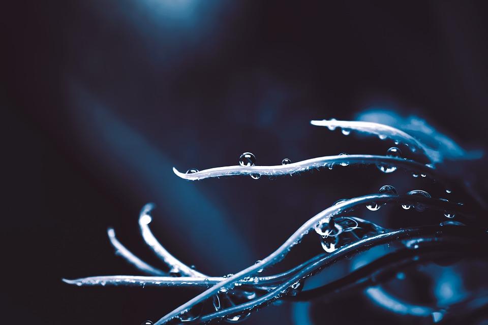 Leaf, Drop, Nature, Leaves, Plants, Dew, Water, Wet