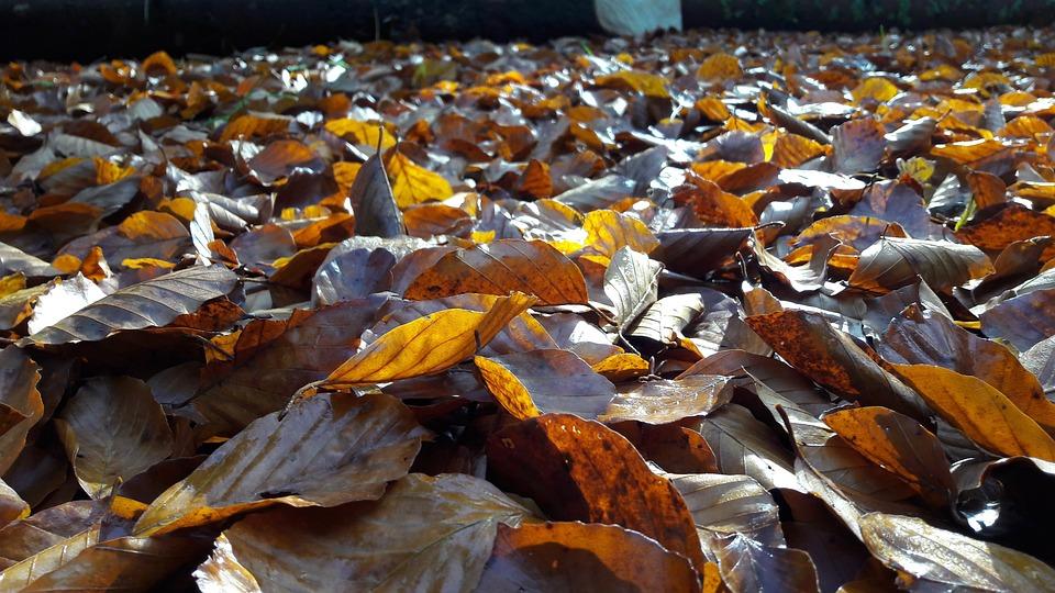 Autumn, Leaves, Fall Foliage, Nature, Discoloration