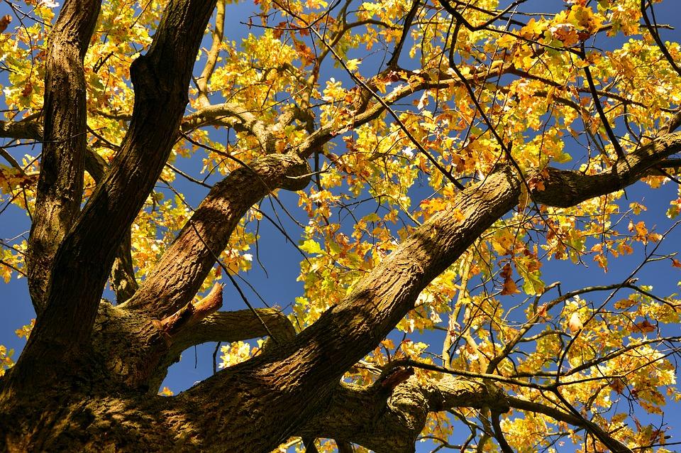 Tree, Leaves, Fall Foliage, Fall Color, Emerge, Autumn
