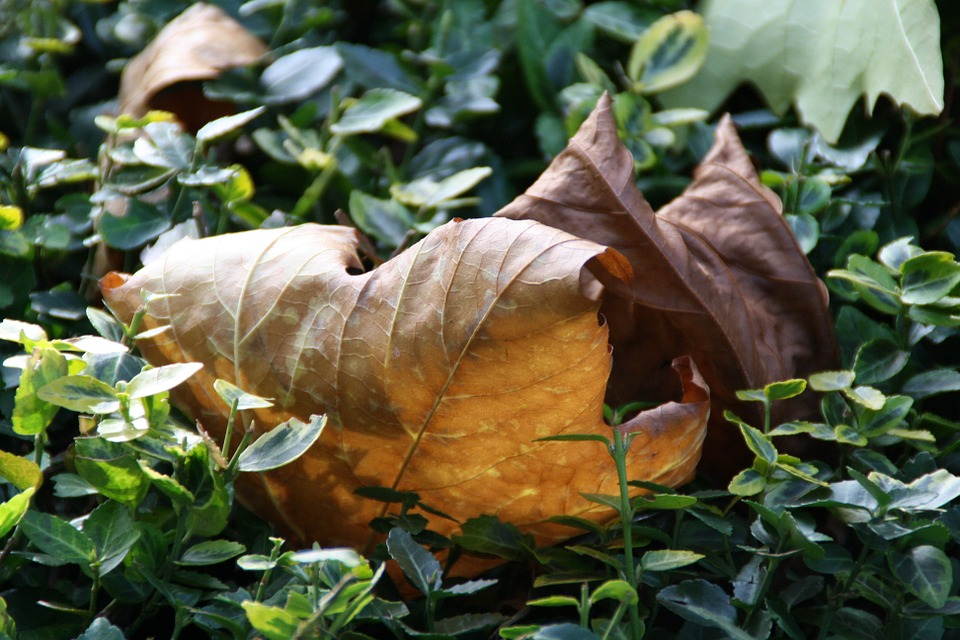 Fall Foliage, Autumn, Leaves, Colorful, Golden Autumn