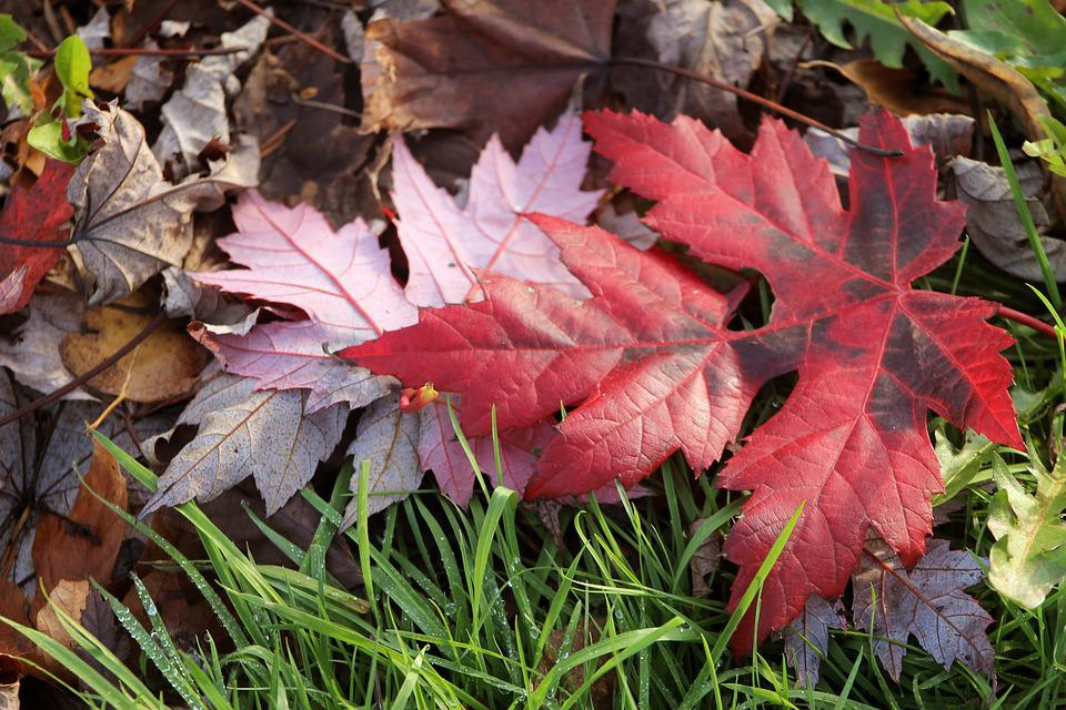 Leaf Leaves Red Pink Green Brown Fall Foliage