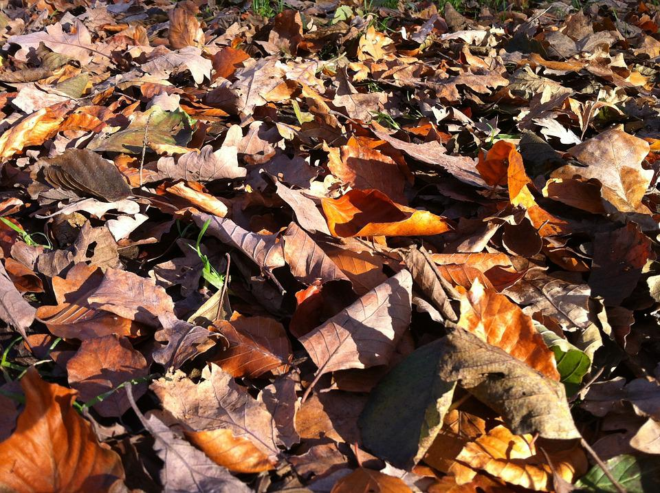 Leaves, Fall Leaves, Forest Floor, Autumn Forest