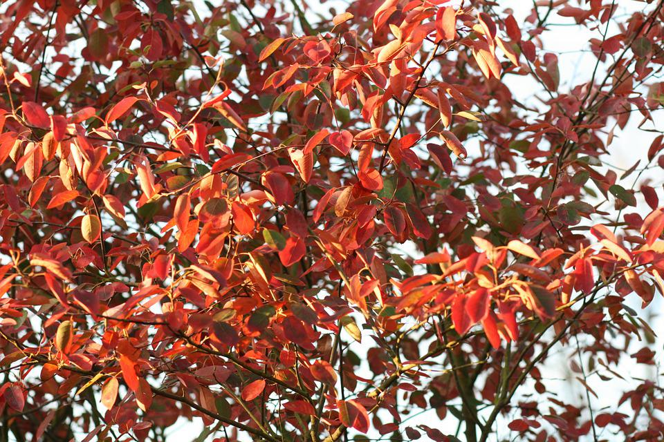 Leaves, Branches, Indian Summer, Fall, Foliage, Tree