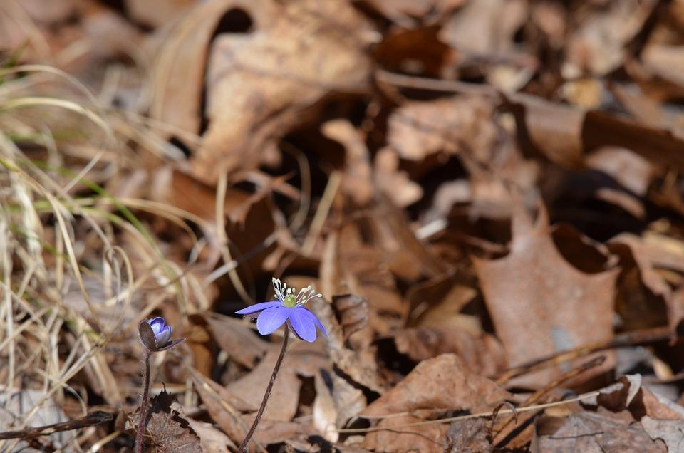 Flower, Purple, Leaves, Woods, Fall, Spring, Plant