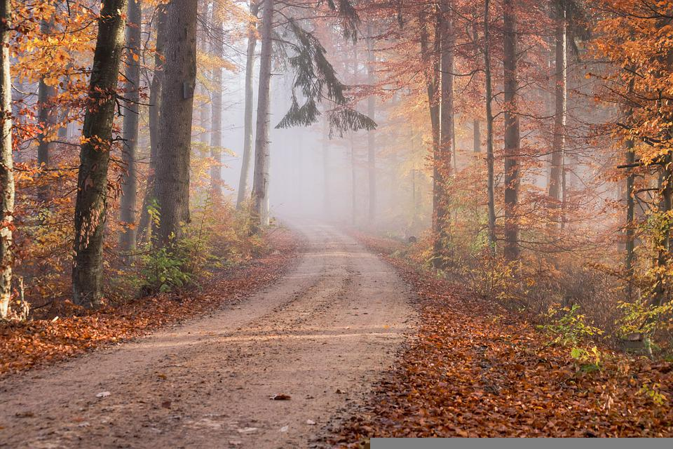 Forest, Path, Trees, Leaves, Fog, Deciduous Forest