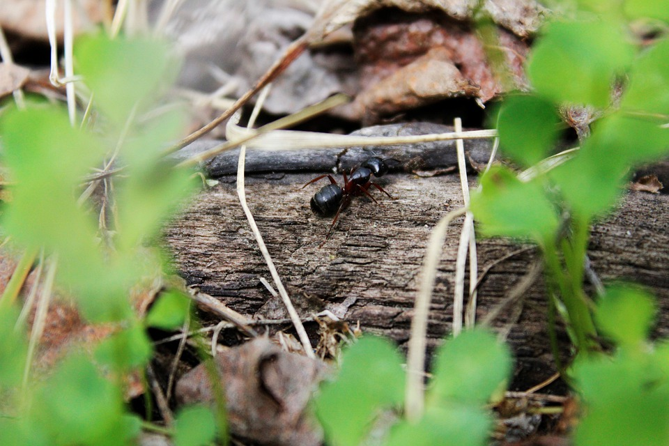 Ant, Insect, Leaves, Foliage, Gardening, Garden, Nature