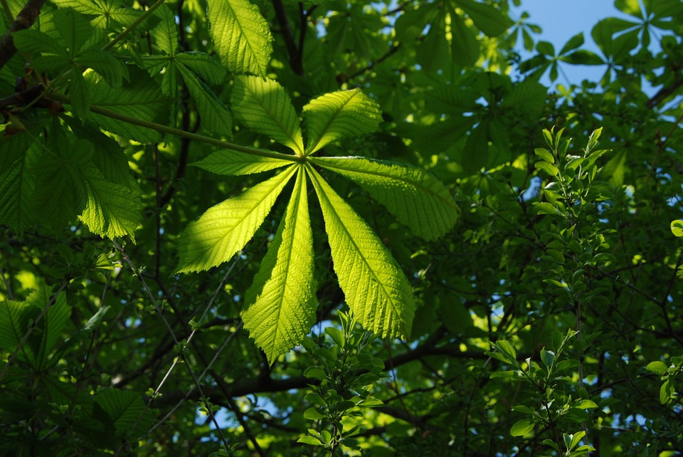 Green, Blue, Leaves, Summer, Tree, Sky, Foliage, Plant
