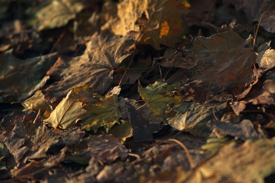 Leaves, Autumn, Forest, Nature, Fall Foliage