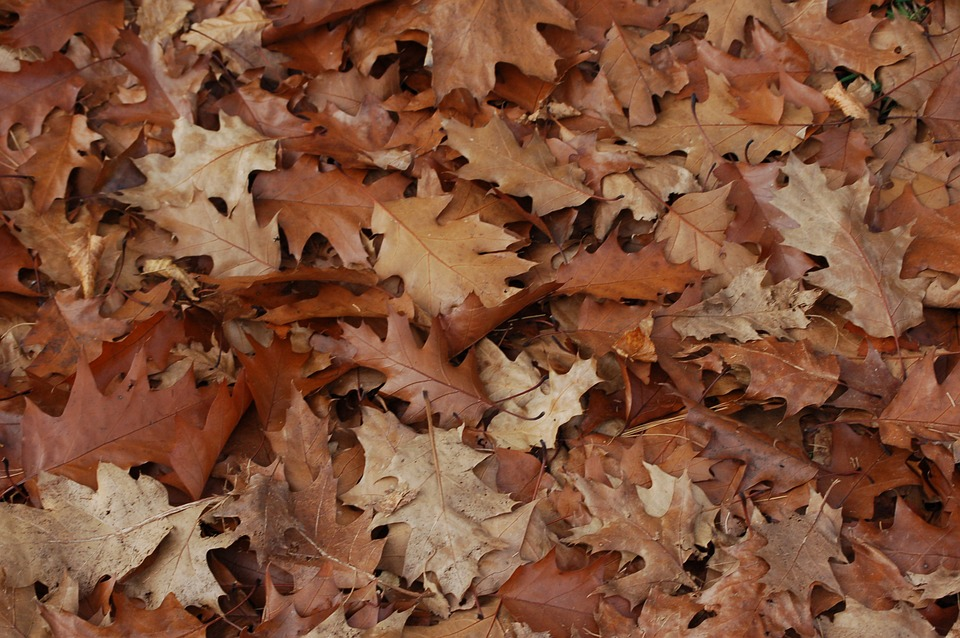 Leaves, Autumn, Forest, Brown, Leaves In The Autumn