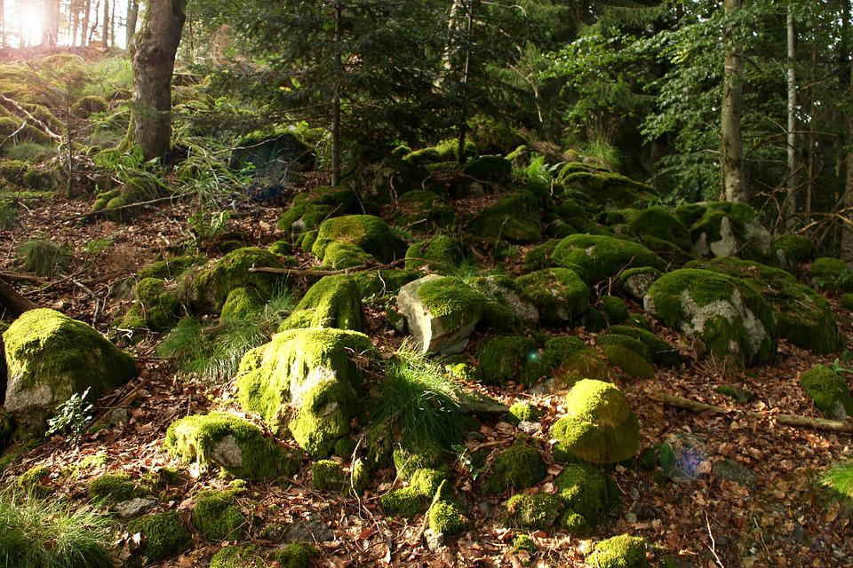 Forest, Moss, Green, Nature, Trees, Plant, Leaves