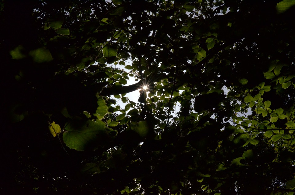 Sun, Leaves, Tree, Forest, Branch, Back Light, Bright