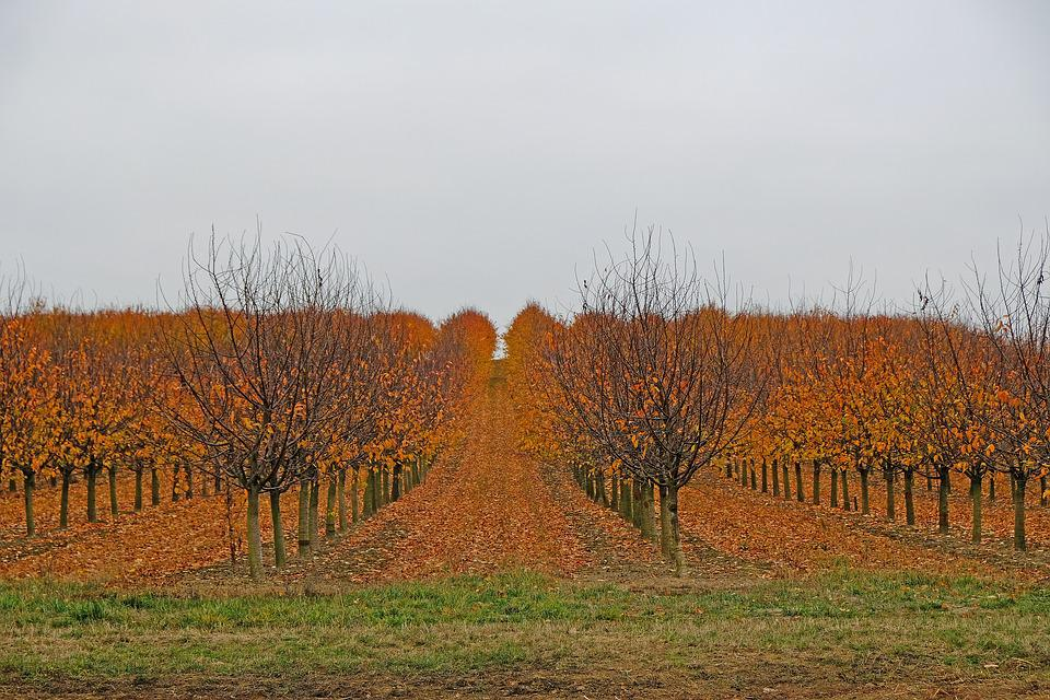 Autumn, Fruit Trees, Nature, Harvested, Leaves, Colored