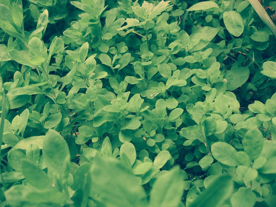 Grass, Greens, Green Leaves, Green Grass, Leaves, Sheet