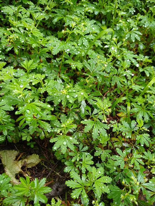 Leaves, Forest, Grass, Raindrops On Leaves, Raindrops