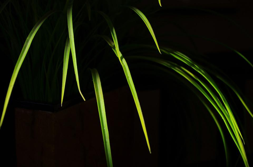 Leaves, Artificial, Grass, Indoor Plant, Green, Grassy