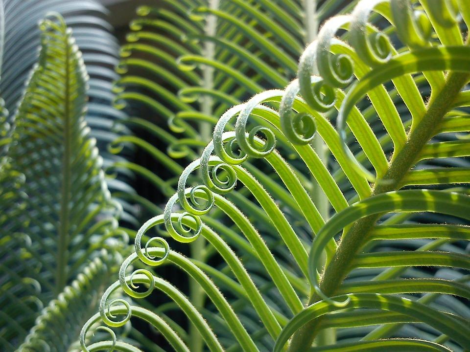 Palma, Plant, Leaves, Nature, Green, Vegetation