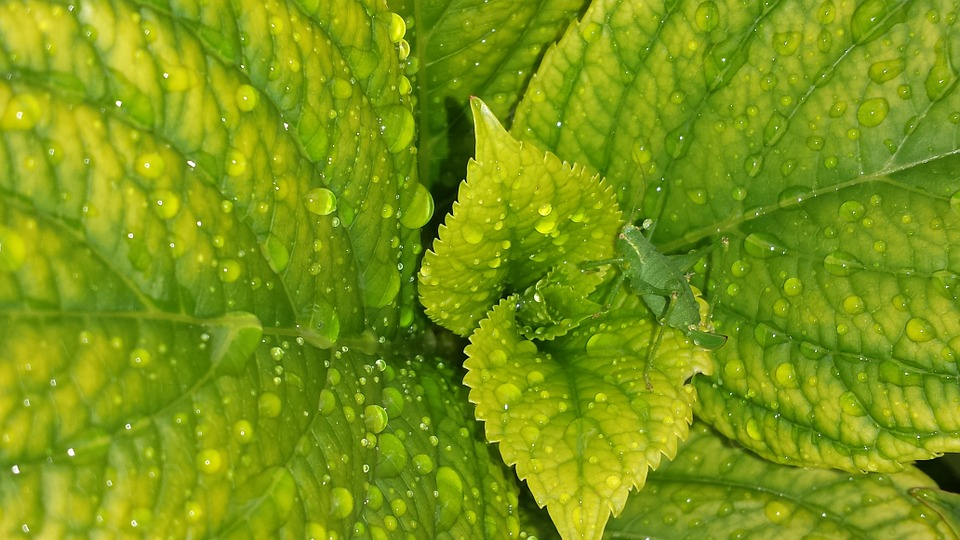 Leaves, Plant, Green, Shades Of Green, Nature