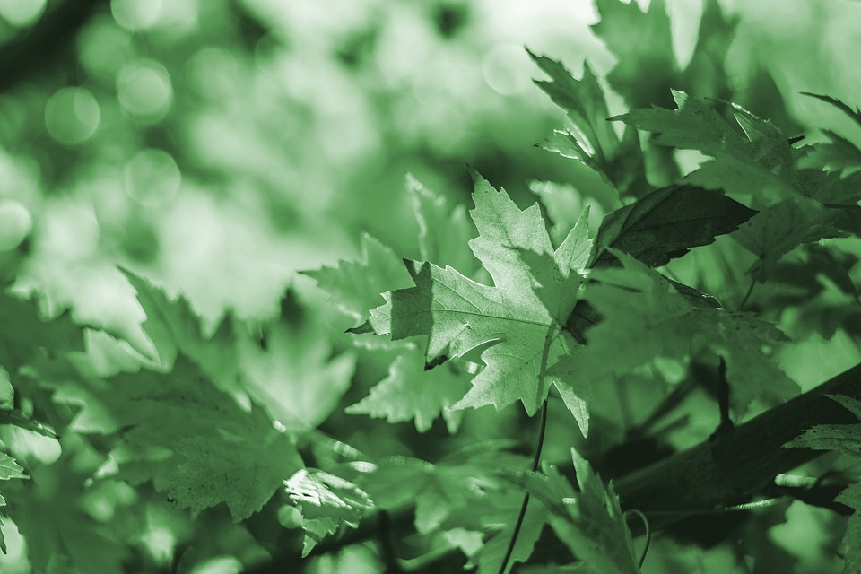Leaves, Green, Background, Nature, Tree, Garden