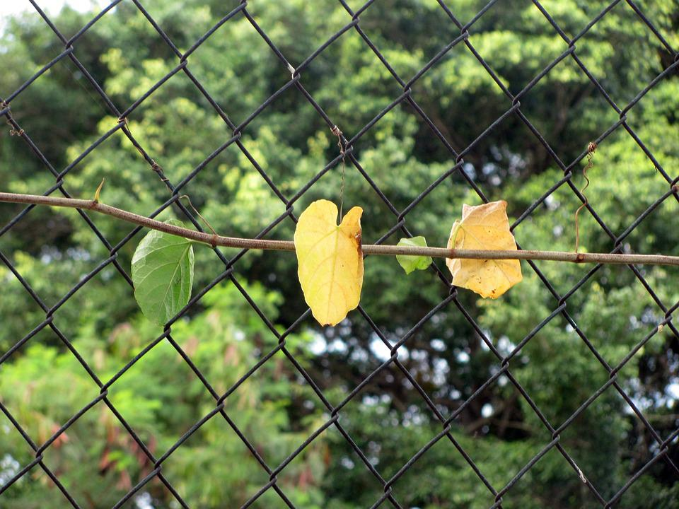 Creeper, Leaves, Grid, Wire, Garden, Plant, Flora