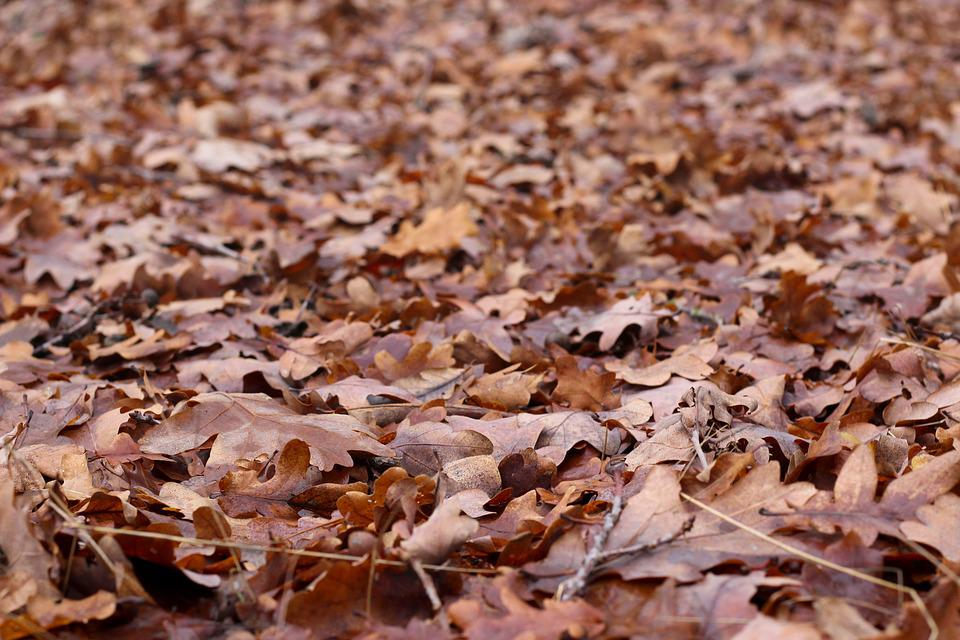Autumn, Leaves, Fall Leaves, True Leaves, Ground, Earth