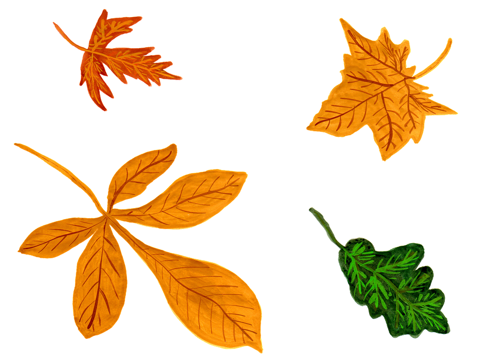 Leaves, Autumn, Watercolor, Isolated, Handpainted